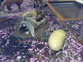 Thumbnail for version as of 22:18, May 25, 2010