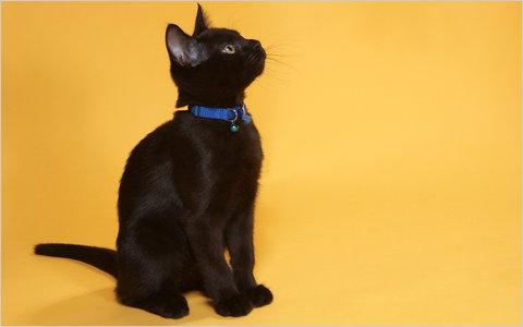 File:14obcats-span-blogSpan.jpg