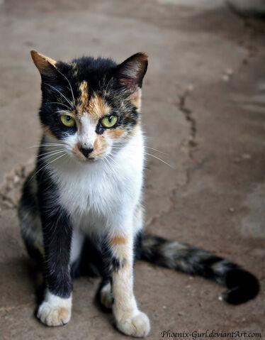 File:The cat by phoenix gurl-d48aomc.jpg