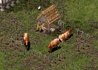 Dairy Farm sh
