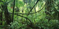 Illiais Jungle