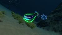 Hoopfish Dunes