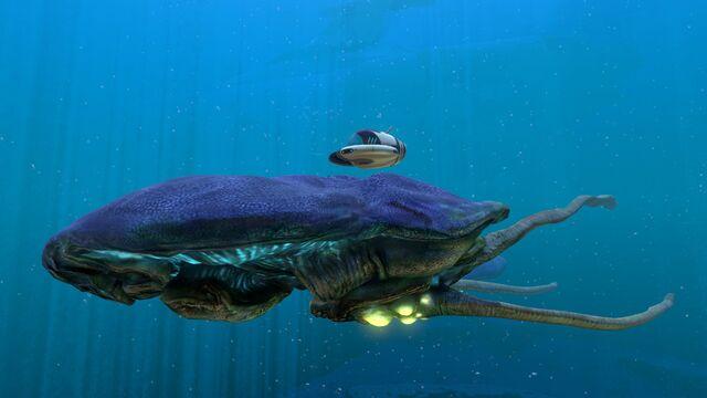 File:Reefback (1).jpg