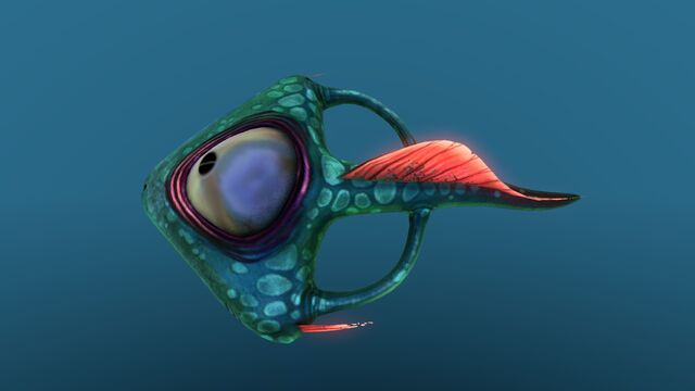 File:Spadefish 10.jpg