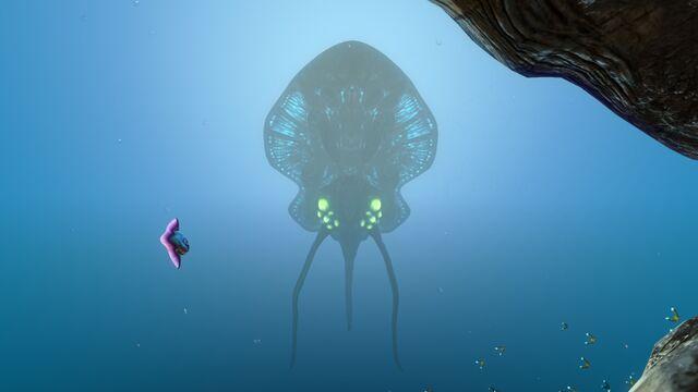 File:Reefback (3).jpg