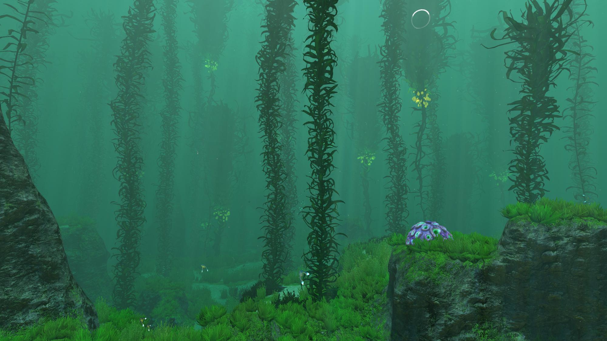 Kelp forest subnautica wiki