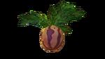 Marblemelon Plant Flora