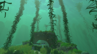 Kelp Forest Shallow