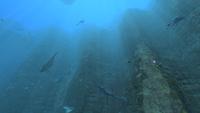 Boneshark Underwater Islands