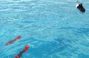 Slivers submerged insitu