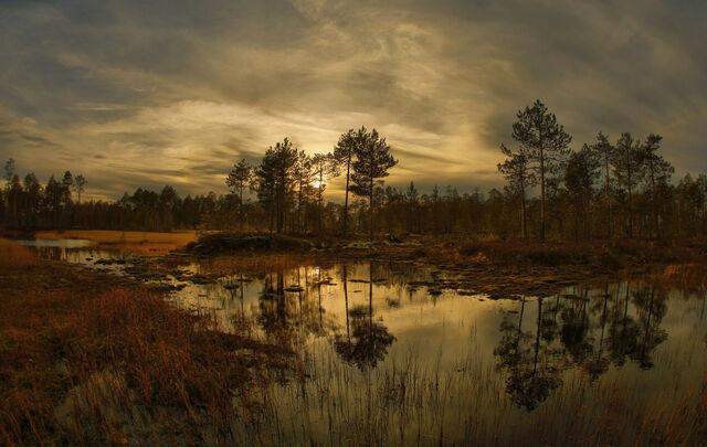 File:-great-vasyugan-swamp.jpg