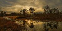 Vasyugan Swamp