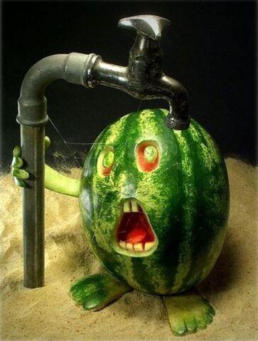 File:Parchedwatermelon.jpeg