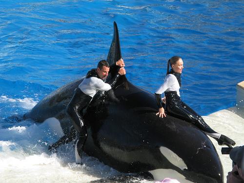 File:Orca human.jpg