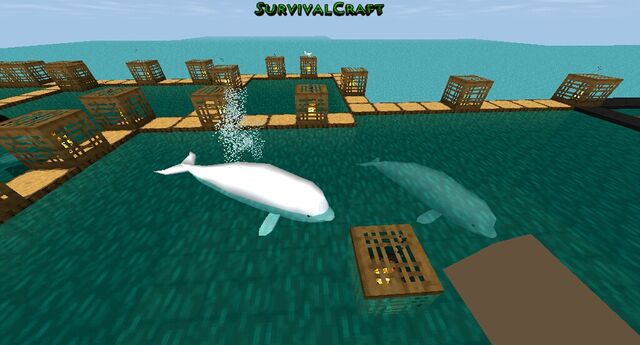 File:Survivalcraft 2015-01-11 08-45-14-.jpg