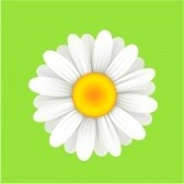 File:6032037-camomile-flower-on-a-green-background-vector-illustration.jpg