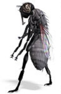 1074100-Clipart-3d-Black-House-Fly-3-Royalty-Free-CGI-Illustration