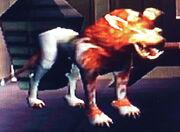 Kath hound