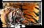 Tiger Paint