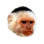 File:Craftitude ingredient monkey.png