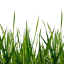 Craftitude ingredient grass
