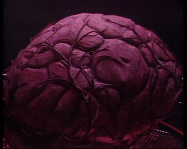 File:Giantbrain.jpg