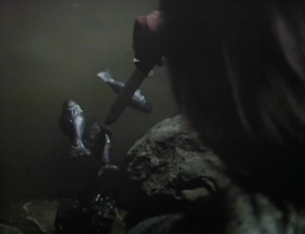File:Poking fish.jpg