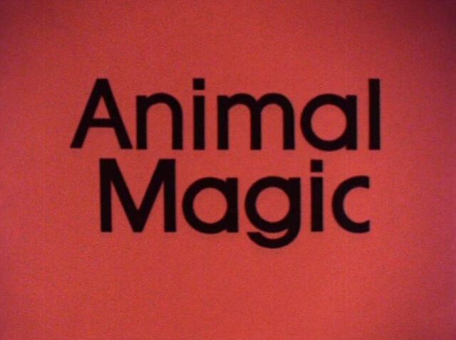 File:Animal Magic.jpg