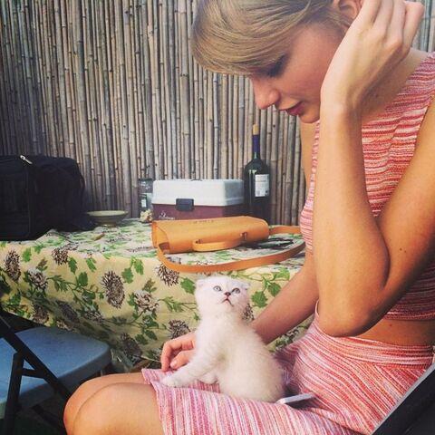 File:Olivia the cat.jpg