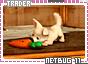 Netbug-somagical11
