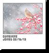 Guinevere-capture