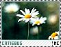 Catiebug-discover