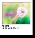 Sponge-capture