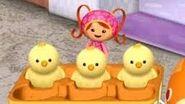 3 chicks