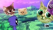 KittyPicnic!