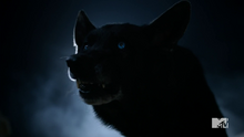 4x12 wolf form blue eyes