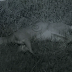 Dead deer found three months ago near Beacon Hill