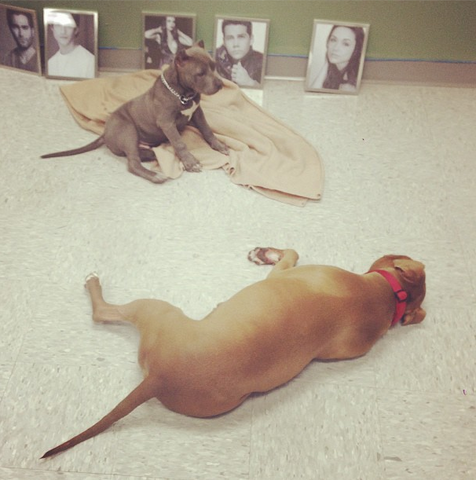 File:Teen Wolf Wikia Behind the Scenes Puppies on Set 2.png