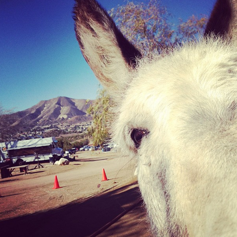 File:Teen Wolf Wikia Season 3 Behind the Scenes Posey's Burro.png