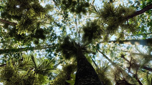 File:Jungle Treetops.png