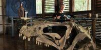 Allosaur/Science & Speculation