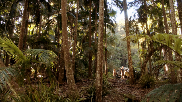 File:Maddy and Mark in the Jungle.png