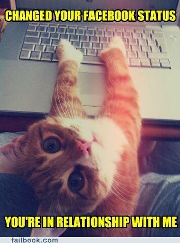 File:Epic-fail-photos-failbook-sure-blame-it-on-the-cat2.jpg