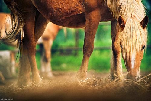 File:Horse08.jpg