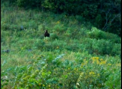 File:Kentucky-bigfoot.jpg