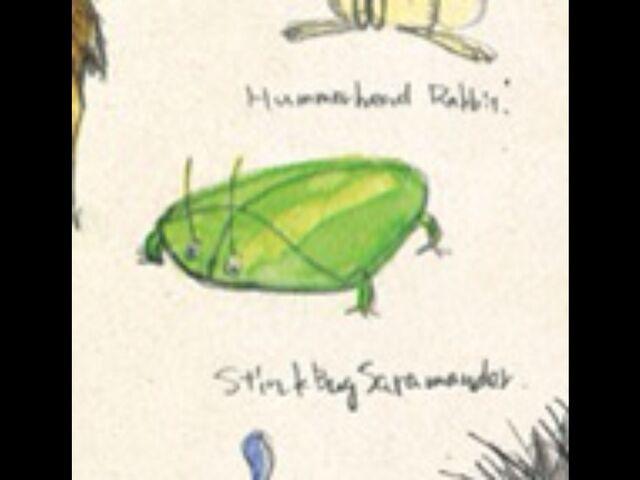 File:Stinkbugsalamander.jpg