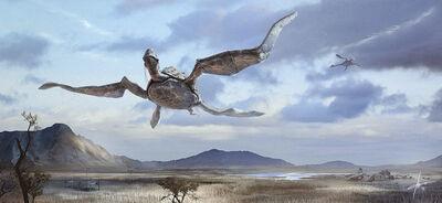 Turtle giant flying