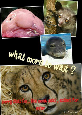 File:Collage 2015-09-04 21 49 04.jpg
