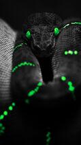 Black Snake Green Eyes iPhone 5 Wallpaper