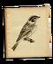 C139 Beautiful birds i01 Painted Bunting